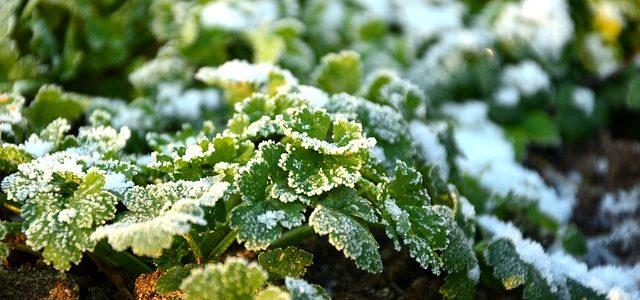 Hoe bereid je je tuin voor op de winter?